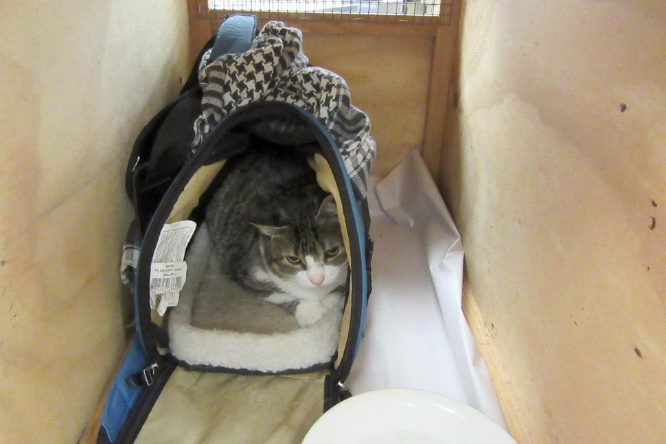 Woman Tries to Smuggle Cat into New Zealand in Handbag
