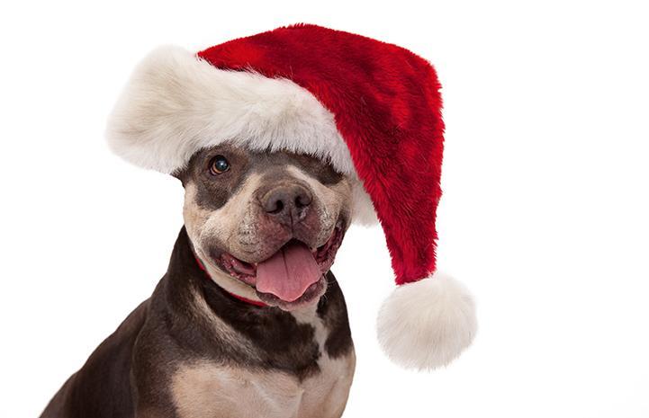 si-holiday-christmas-paisley-3103lf