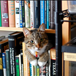 Humans Copy Cats For Chance to Sleep on Book Shelves