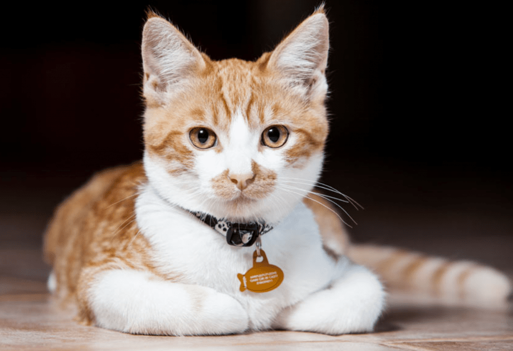 Canadian City Wants to Tag Cats, Keep Them Indoors