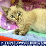 Shrink-Wrapped and Shipped, Miracle Kitten Saved by UPS Driver