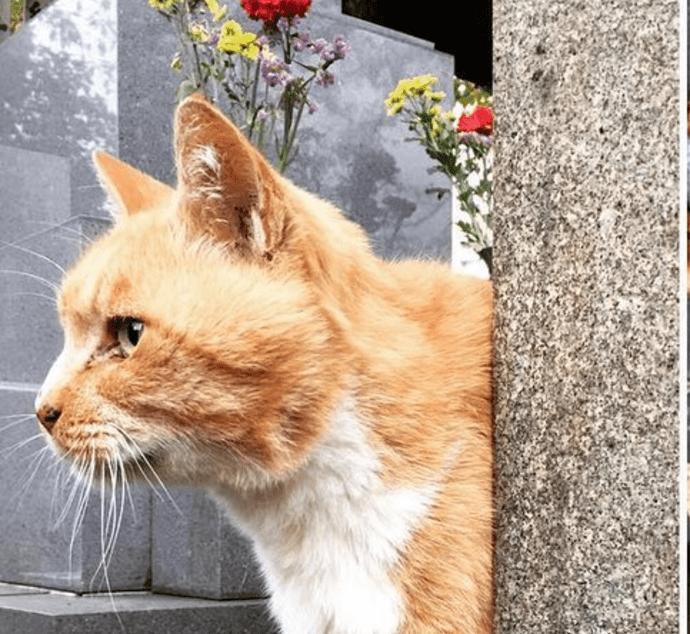 Gentle Cemetery Cats Comfort Mourners