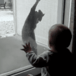 Crazy Cat Love Starts at an Early Age