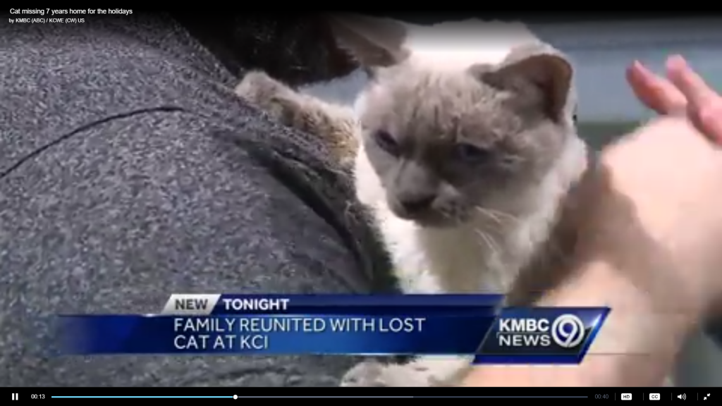 Cat Missing for 7 Years Is Home, Just in Time for Christmas