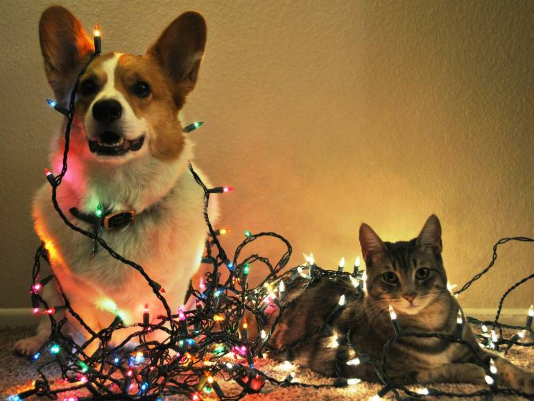 Holiday Pet Moments to Tickle Your Funny Bone