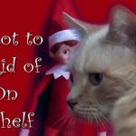 Cat Plot to Vanquish Elf on the Shelf