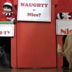 Furball Fables: Are You Naughty or Nice?