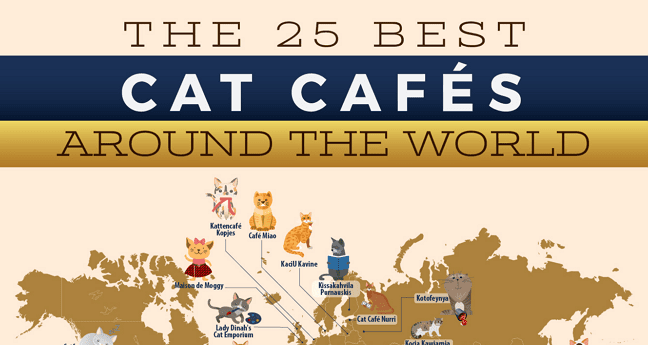 Now, No Matter Where You Go, You Can Find the Comfort of a Cat Cafe