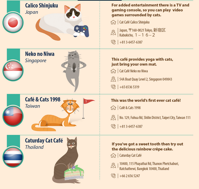 Cat Cafe's-01 2