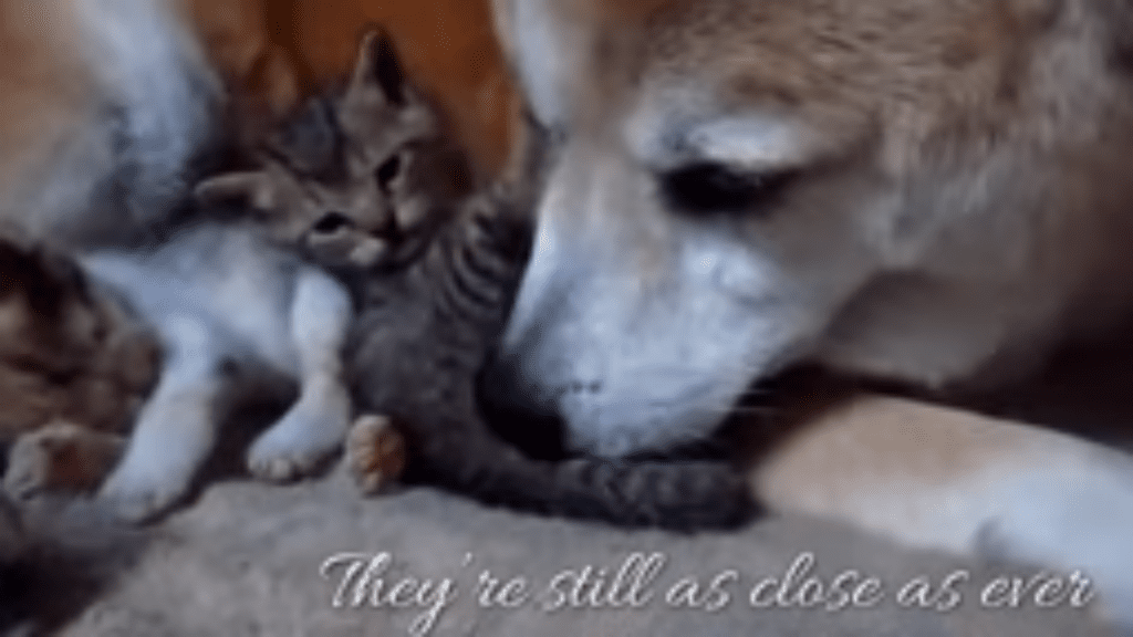Adorable Dogs Caring for Kittens