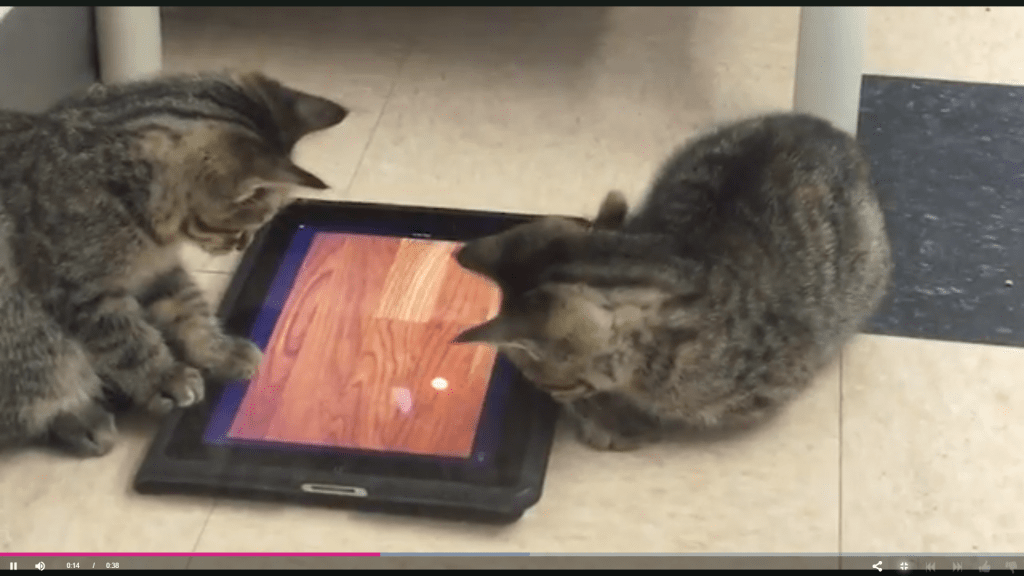 iPads for Cats Program Eases Shelter Cat Stress