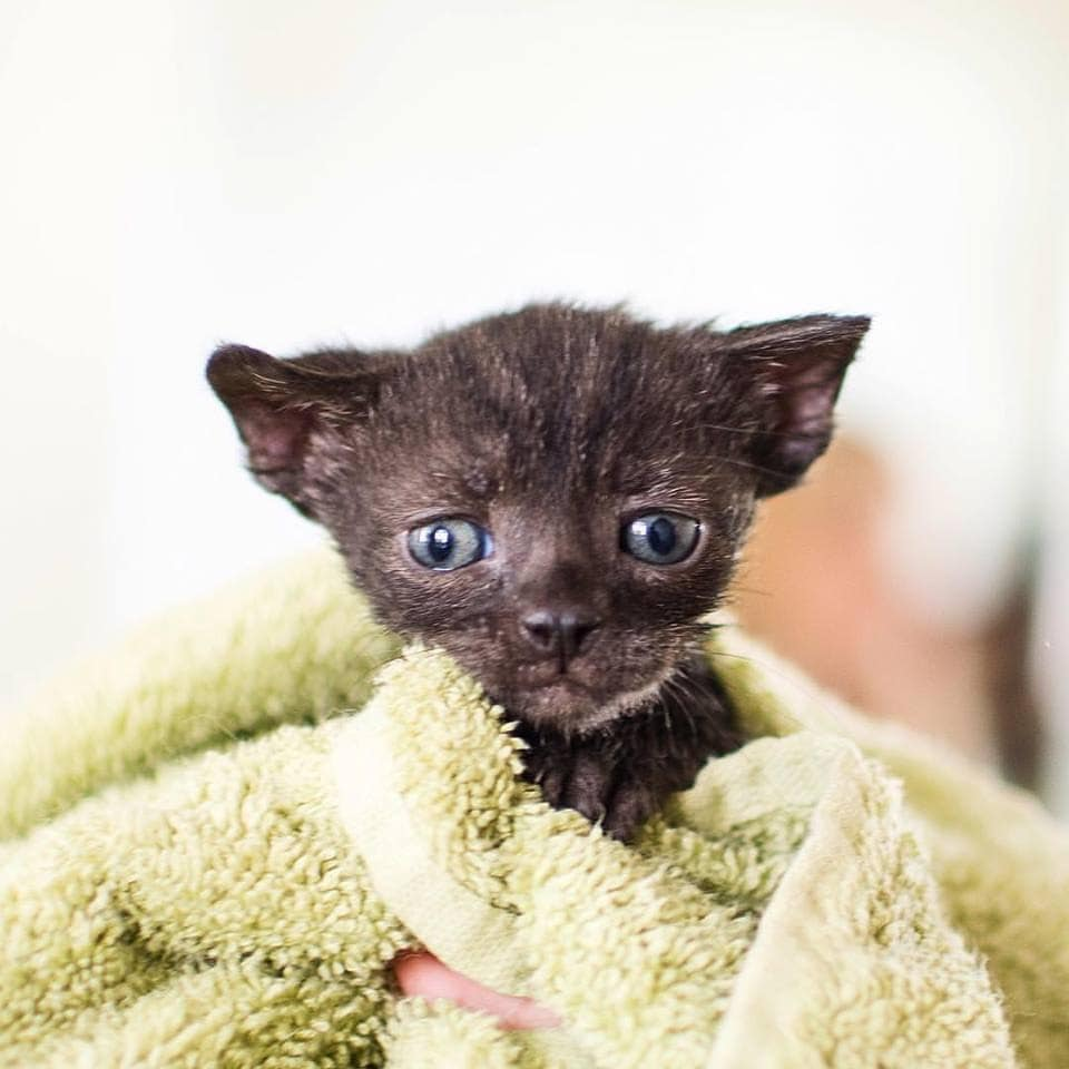 How Much Are Cats At Animal Shelters