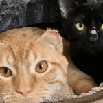 Three Cat Brothers Survive Bitter Cold by Sticking Together