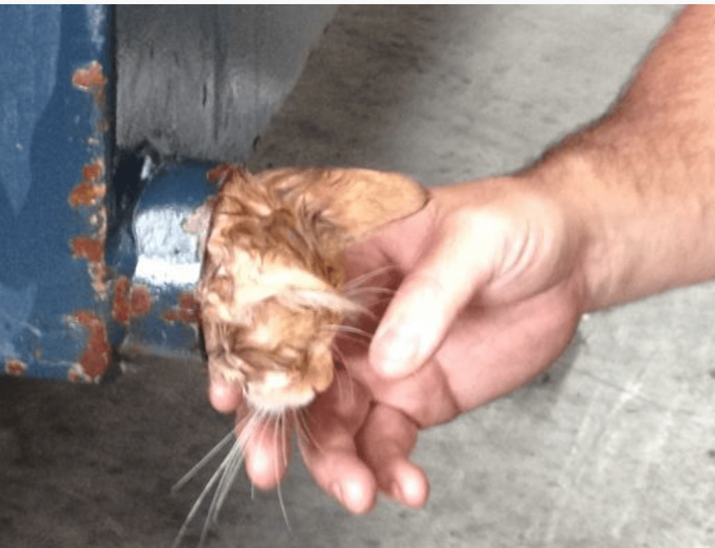 Firefighters Use Olive Oil to Free Kitten