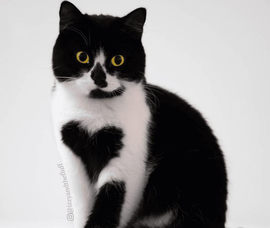 """Tuxedo Cat Wears """"Heart"""" on Her Chest"""
