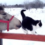 Cat Engages in Horse Antics