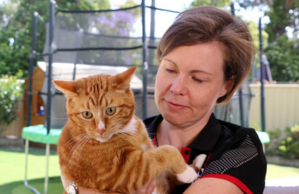 Meet Harry the Blood Donor Cat