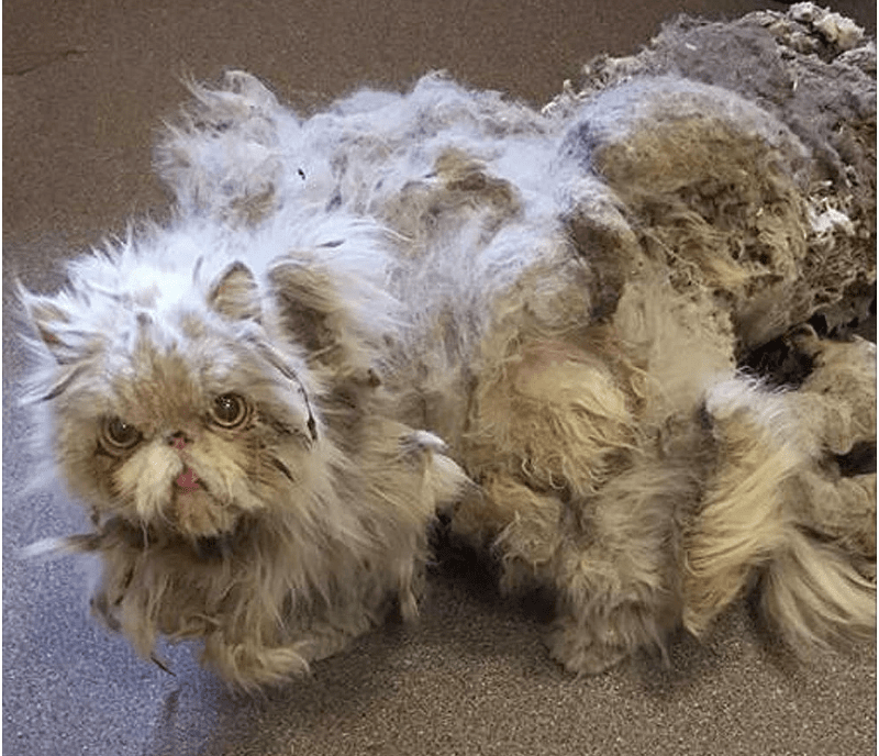 From Matted Mess to Social Media Star