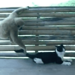 Cat Puts Up With Monkey Business