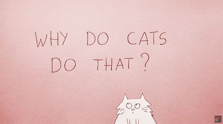 Why Do Our Cats Do That? So Glad You Asked Because Here is the Answer