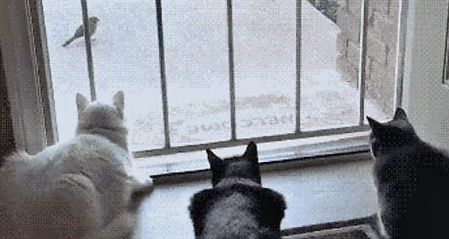 So You're Looking Outside Watching Birds, Then THIS Happens!