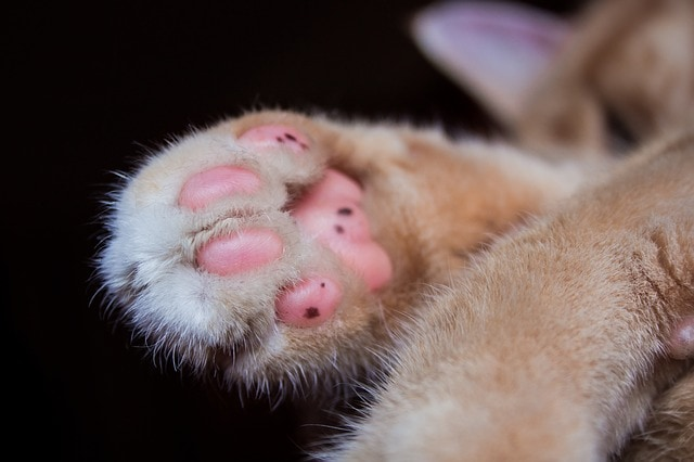 New Jersey One Step Closer to Being the First State to Ban Declawing