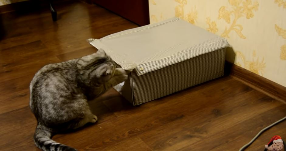 The Box: A Unique Entry