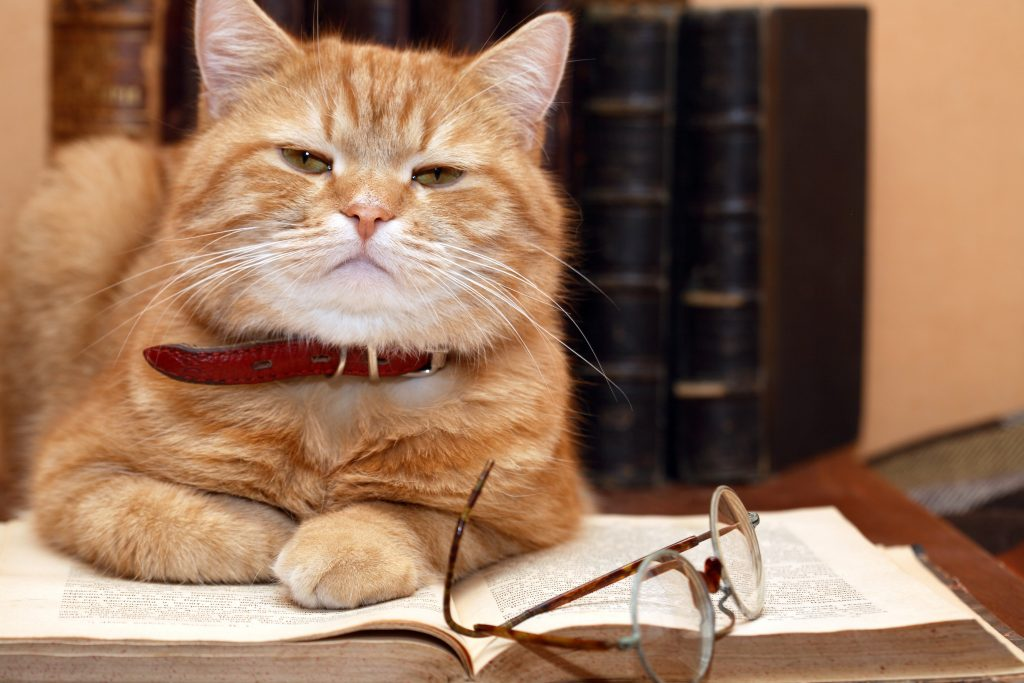 New Study Suggests Cats are Just as Smart as Dogs