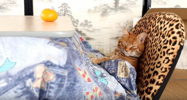 Cat Looks So Comfortable You'll Want to Take a Nap, Too