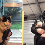 Cat Rescued by Mechanic From Exhaust Pipe of Van