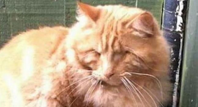 Blind Cat Lost in Dead of Winter Rescued by Strangers