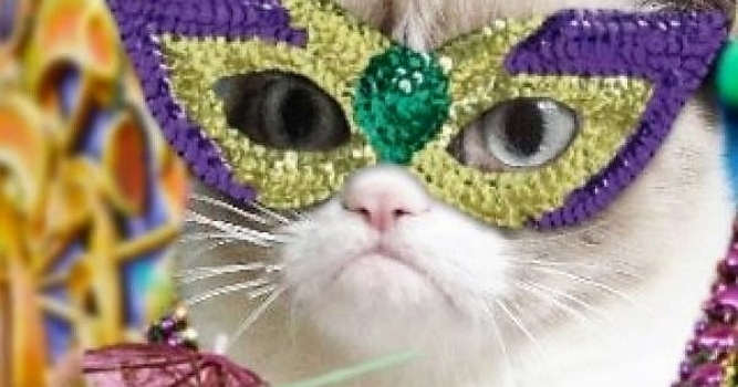 Celebration: Fat Cats on Fat Tuesday