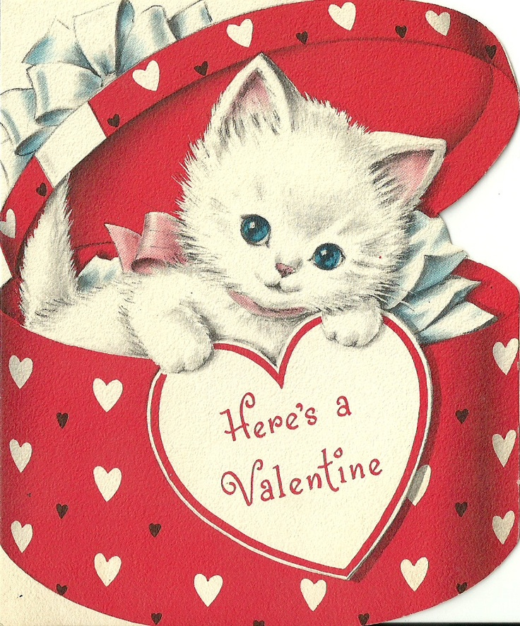Happy Valentine S Day Kitty Style Life With Cats