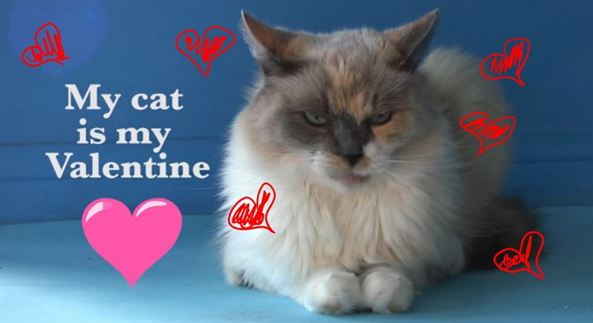 A Love Video: My Cat is My Valentine