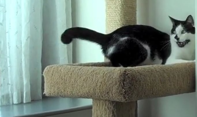 Bringing the Outdoors In: Cats & Their Cat Trees