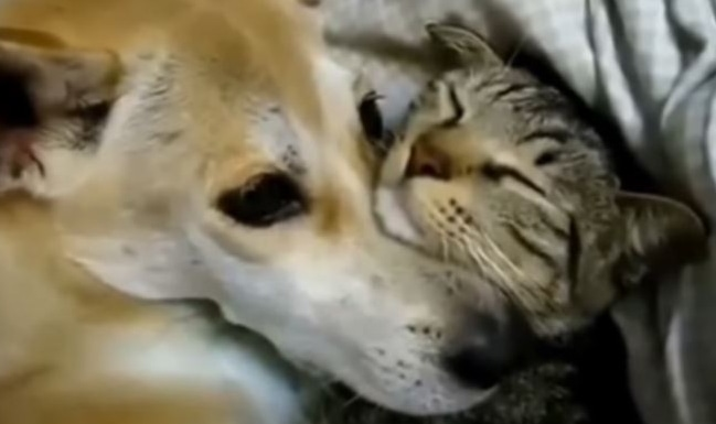 Kittens, Puppies, Dogs, Cats, These Friends Will Melt Your Heart