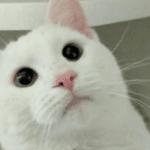 Love this face! Snowb