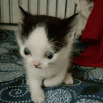 Spunky Special Needs Cat Inspires His Rescuer