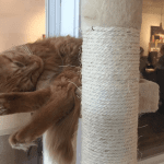 Cat Cafe Finds Success Helping Shelter Cats