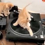 Kittens Mix Music