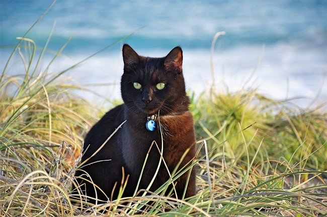 """Willow Achieves """"Purrfect 8"""" Traveling 368 Days in Australia"""