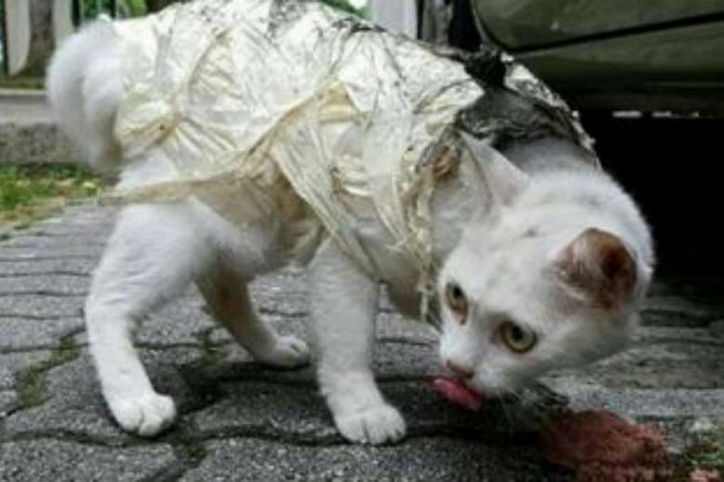 Cat Tightly Wrapped in Masking Tape Rescued and Recovering