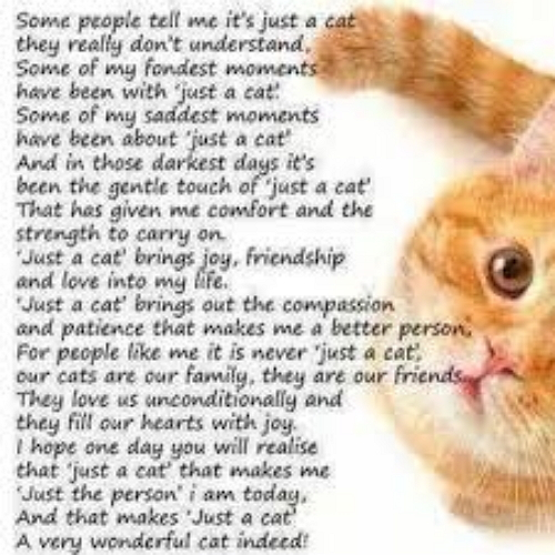 Facebook Poem To Dogs And Cats Who Have Died