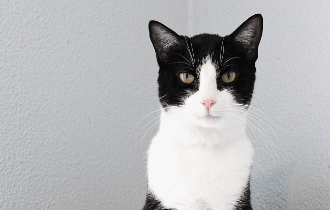 These Cats are Ready to Fall in Love With You