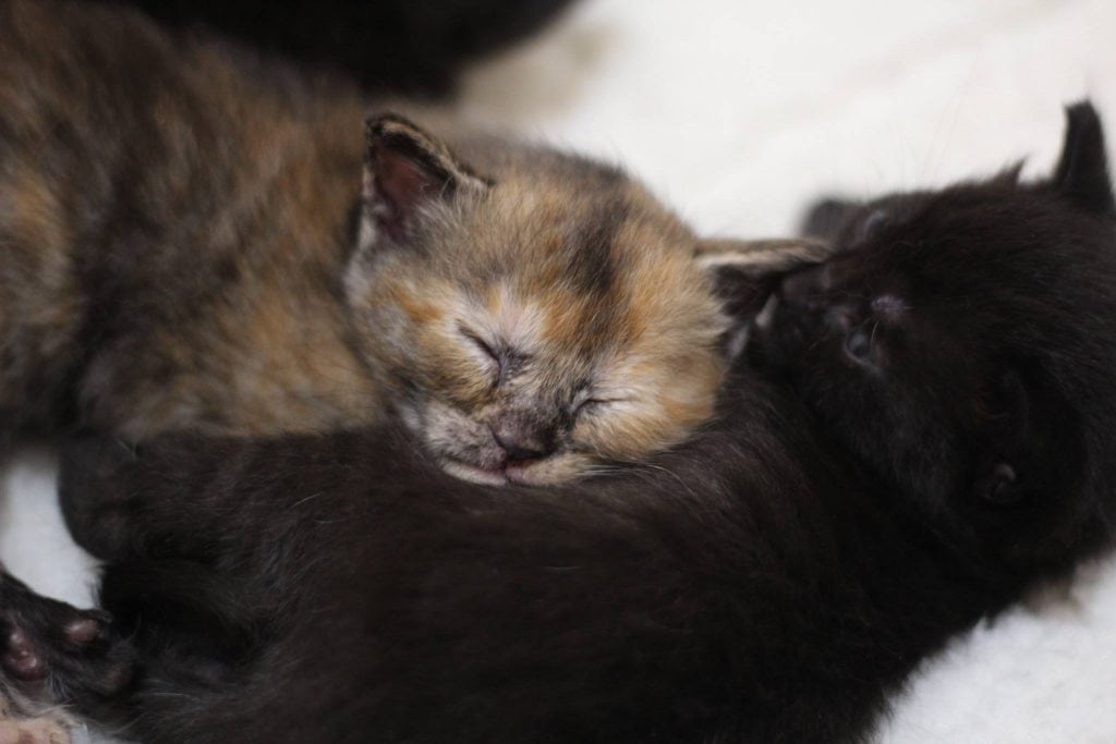 Three Tiny Tabbies Will Steal Your Heart