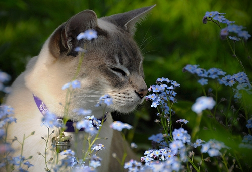 It's Spring! Here are 9 Things to Watch for and Keep Kitty Safe