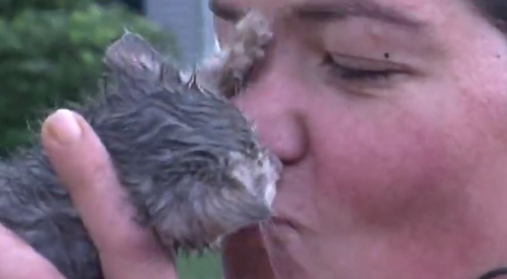 SAVED! Watch as Tiny Kitten Rescued from Drain Pipe