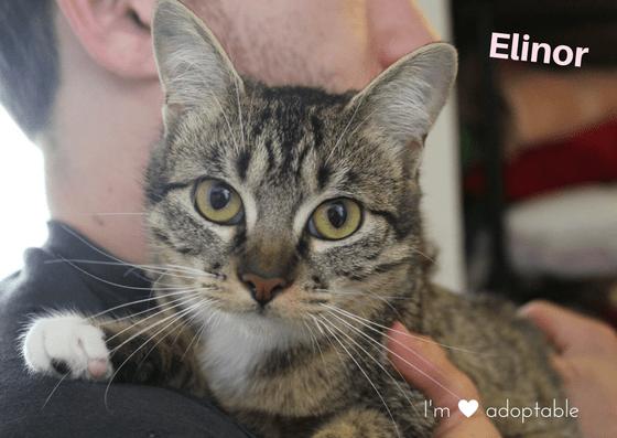 Elinor 3 year ole female