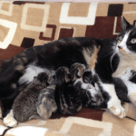 Kitten Rescue LA: Saving 1,000 Kittens and Cats a Year!
