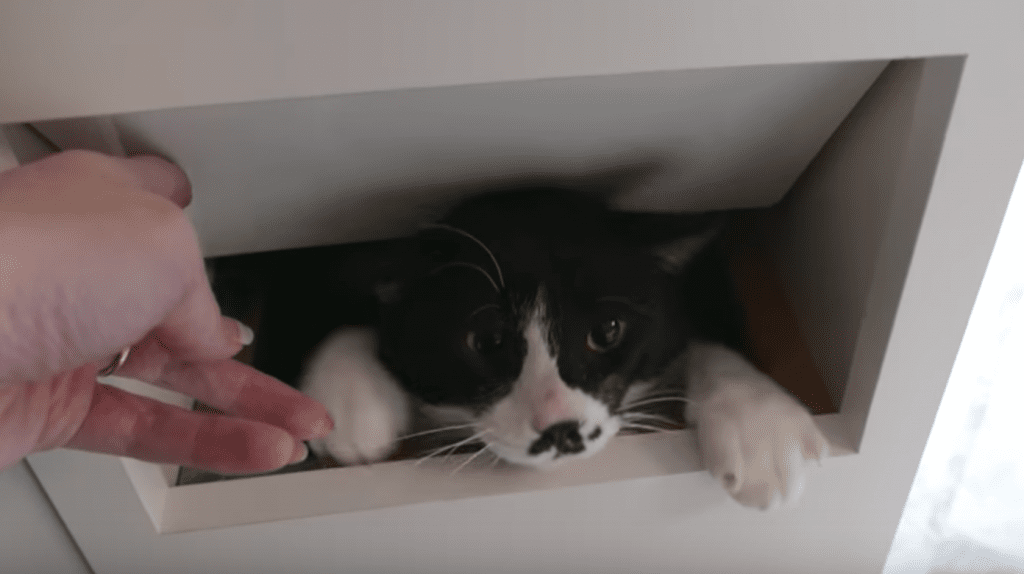 """Couple Rescues """"World's Most Annoying Cat"""""""